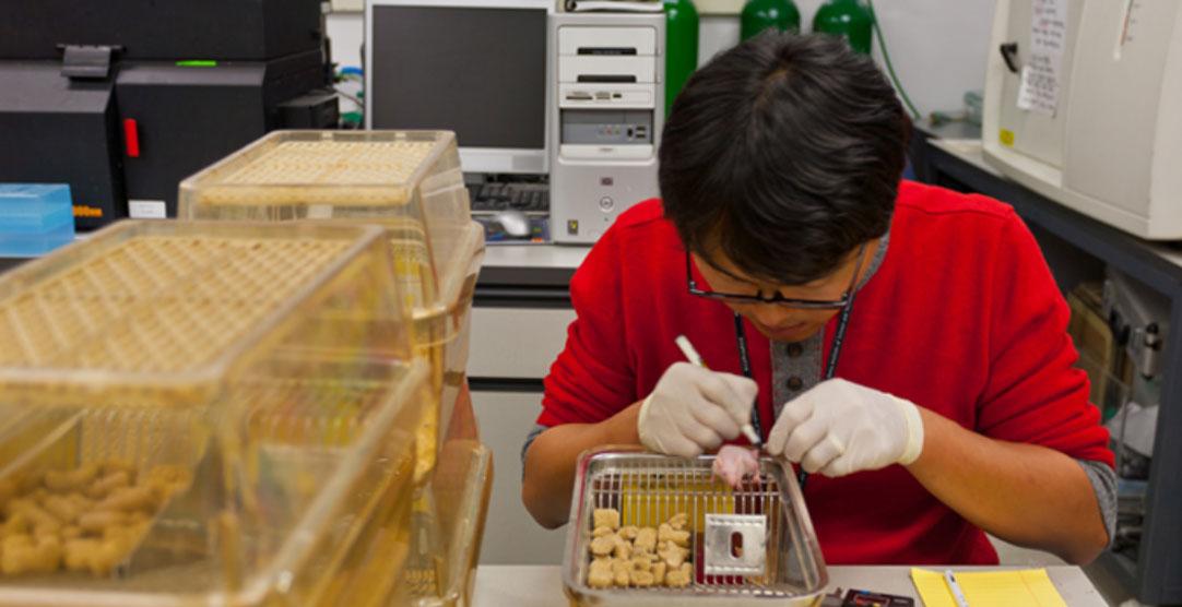 암이 이식된 쥐에 진단과 동시에 치료가 가능한 테라그노시스 물질을 주입하는 모습